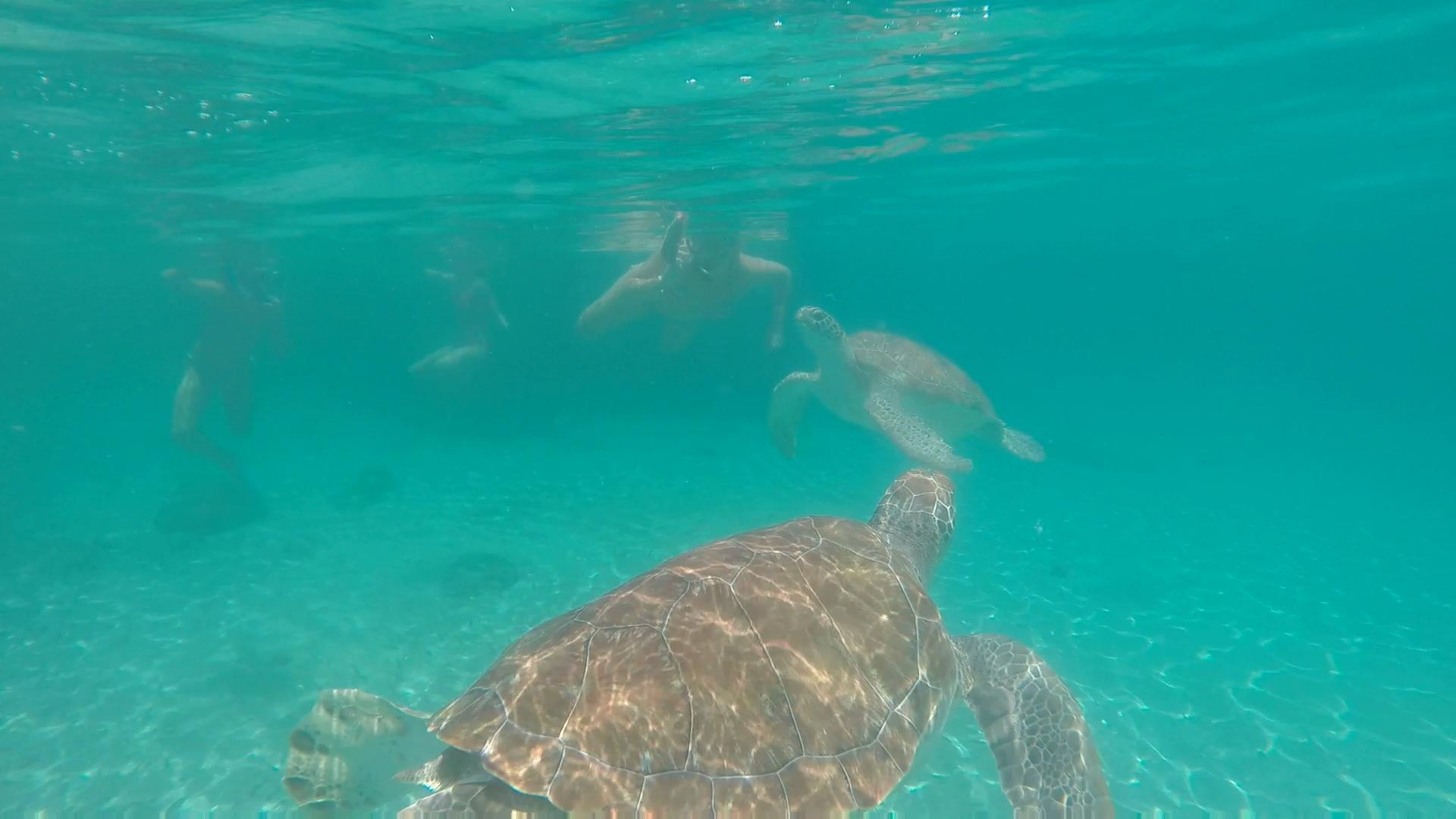2 schildpadden